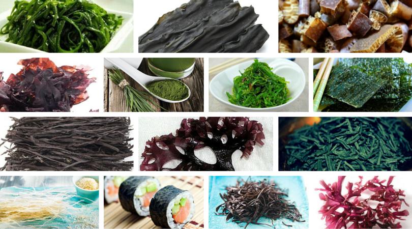 algas-propiedades -La Cocina Ortomolecular